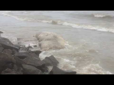 Body of dead whale washes ashore in a Bambalapitiya | YesPrabhu Videography