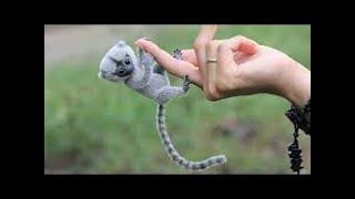 இதெல்லாமா வீட்ல வளர்ப்பாங்க     Cutest Exotic Animals You Can Own as Pets    தமிழ் info      Tamil