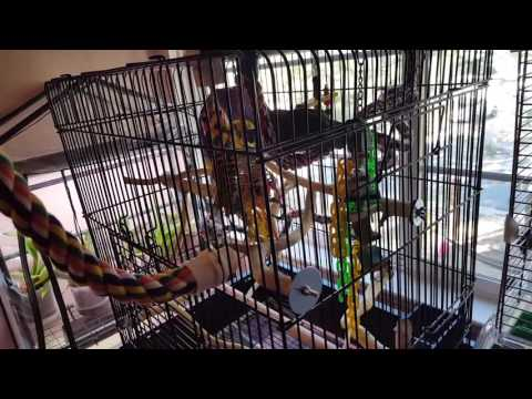 Prevue Square Roof Parrot Cage