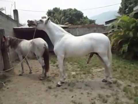 Crusa de yeguas con burros