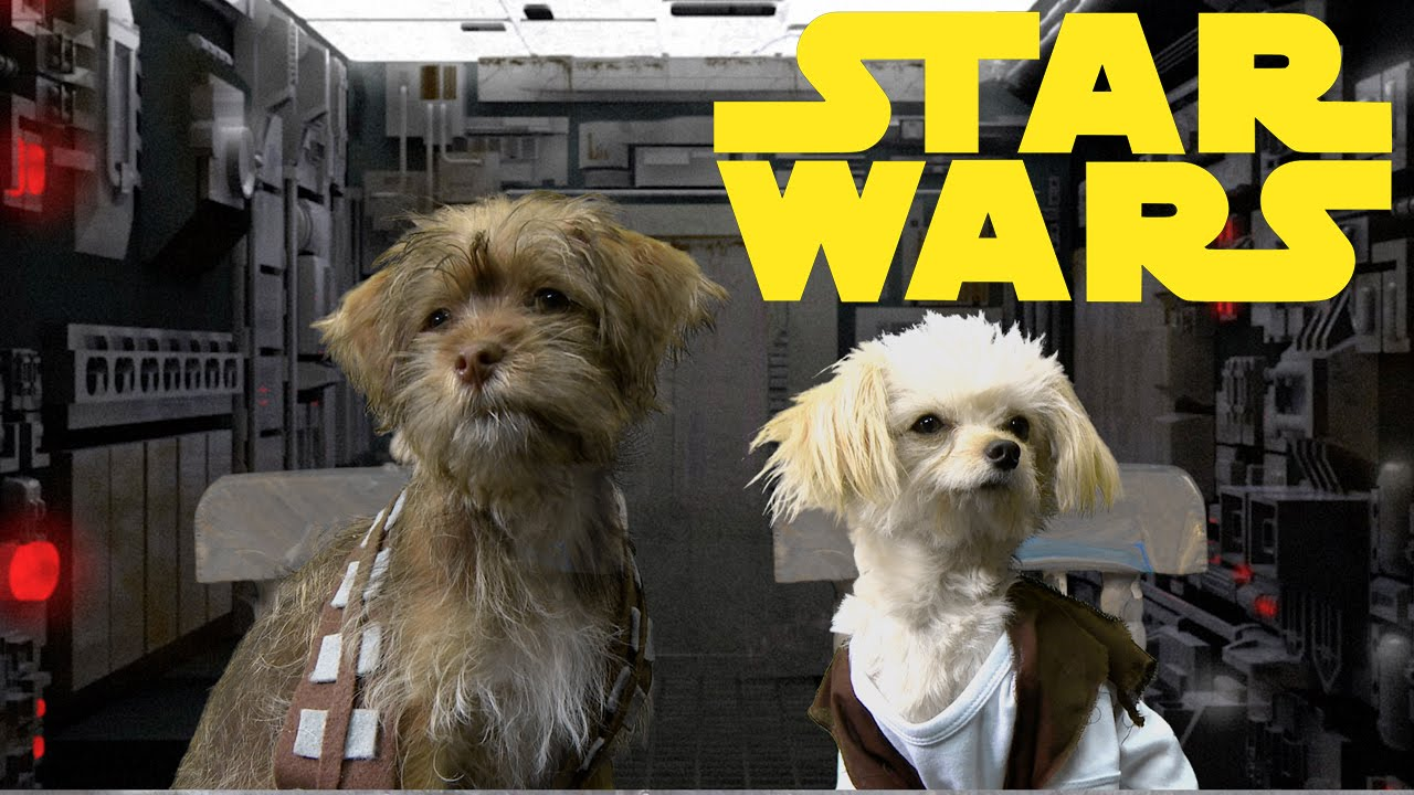 Star Wars Trilogy Cute Puppy Edition Youtube