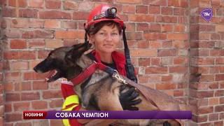 Павлоградський собака посів 12-е місце у світовому рейтингу собак-рятувальників