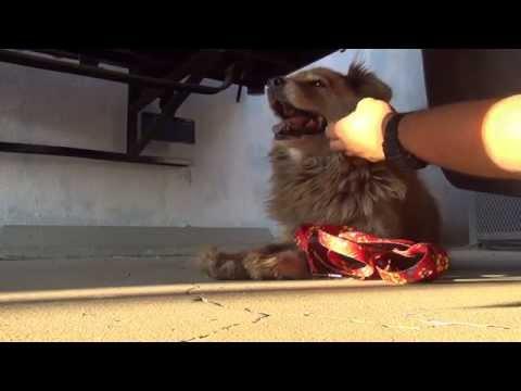 Sonya, the Google maps stray dog rescue  Please share