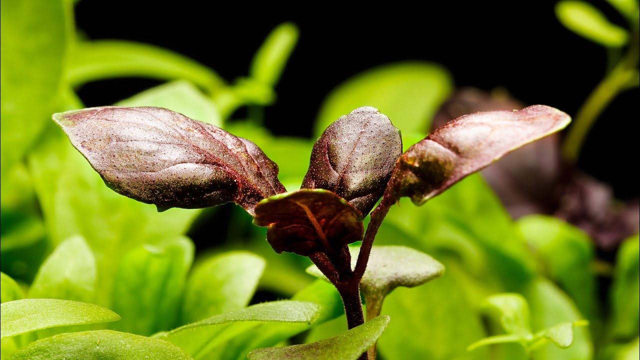 plants nature amazing lapse dancing