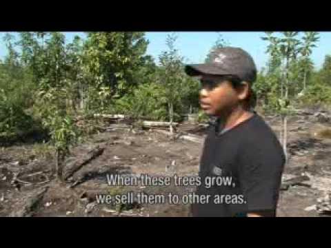 Illegal logging in Central Kalimantan, Indonesia