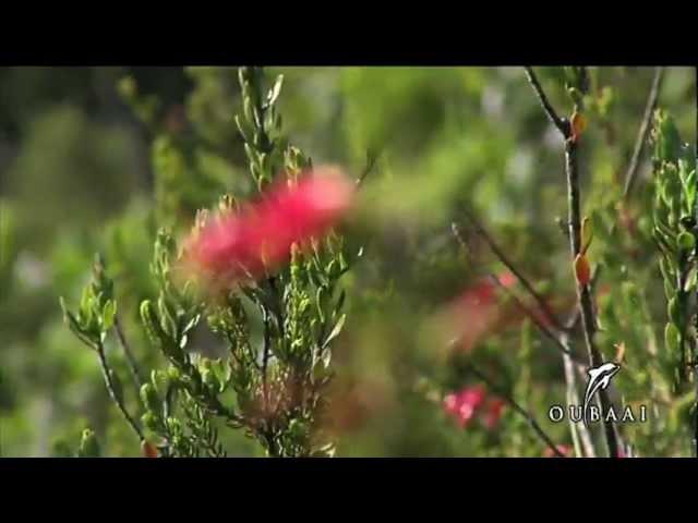 Video Oubaai Golf Estate in Heralds Bay (Garden Route) in Zuid-Afrika