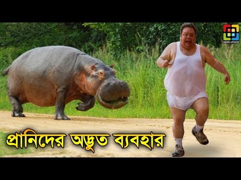 | Top 10 Animals That Were Caught Stealing