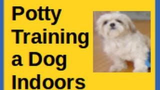 Potty Training a Dog Indoors