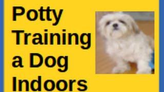 Potty Training a Dog Indoors