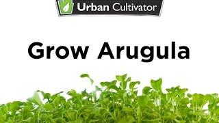 How to Grow Arugula Indoors | Urban Cultivator
