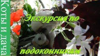 ЭКСКУРСИЯ ПО ПОДОКОННИКАМ Мои комнатные цветы и растения Цветы на подоконнике 2