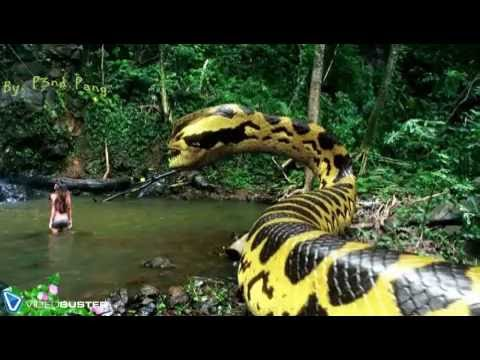 Magnificent Youtube snake island brazil