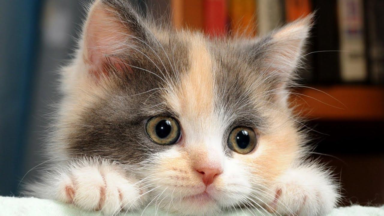 Картинки красивые с котиками со словами