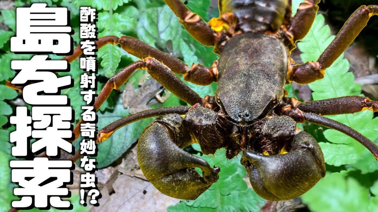 世界奇物图片_世界三大奇虫が生息する島を探索しまくった結果!? - YouTube