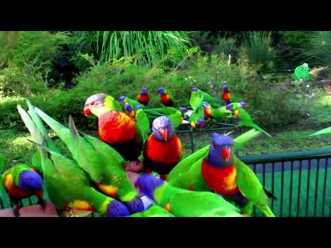 Currumbin Wildlife Sanctuary: Gold Coast, Australia
