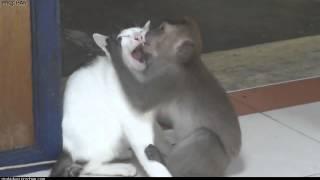 Funny monkey kissing a cat / Обезьяна целуется с кошкой как человек!