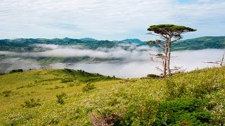 видео Природа Курильских островов