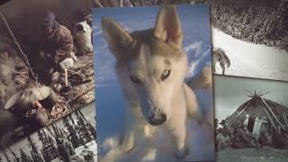 История породы Сибирский #Хаски #Видео основано на документальных фактах