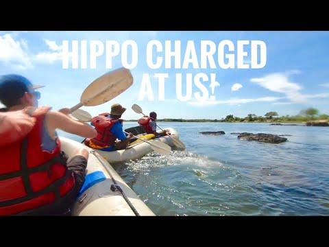 Scary HIPPO Chase! - Zambezi River