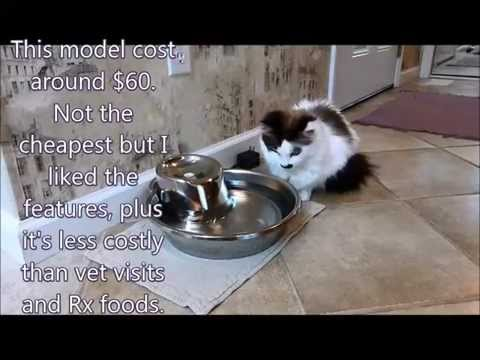 Review of Pioneer Pet Big Max water fountain for cats