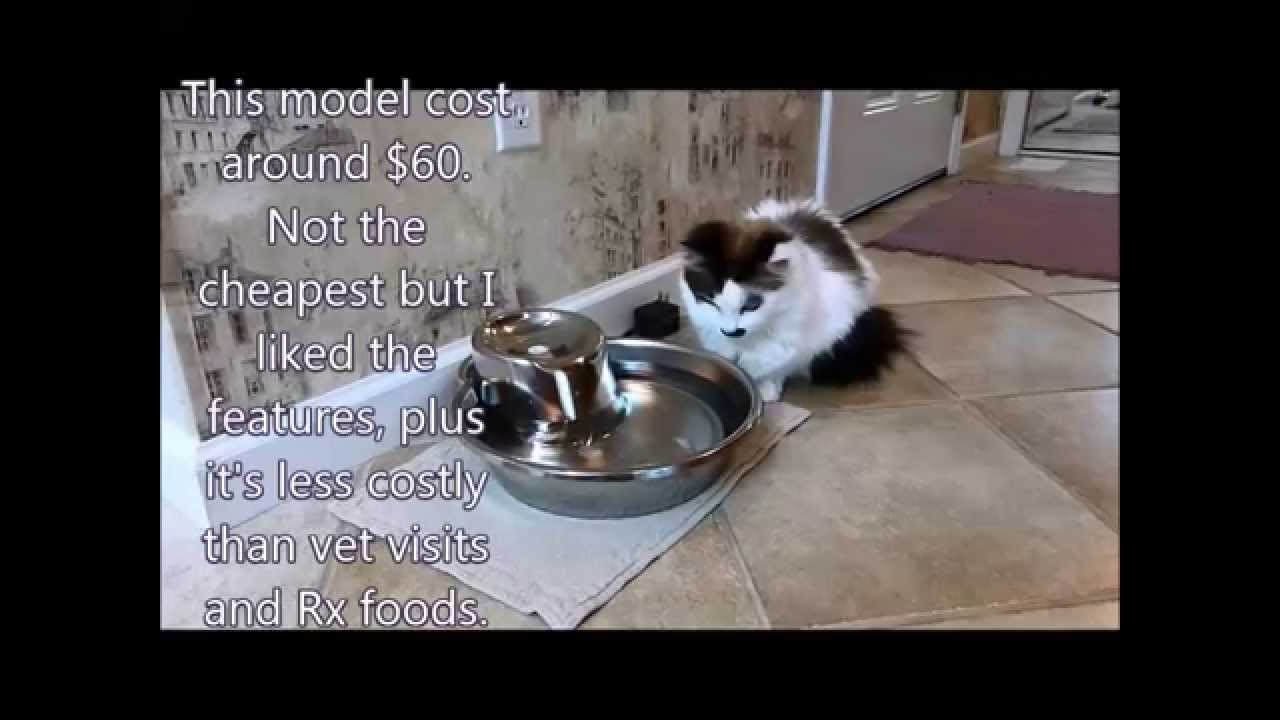 pioneer pet fountain. Review Of Pioneer Pet Big Max Water Fountain For Cats