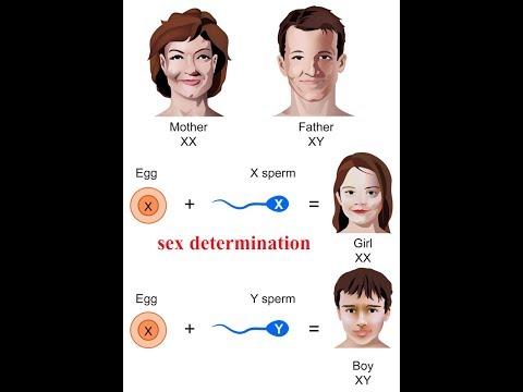 SEX DETERMINATION | GENETICS |SSC CGL EXAM | UPSC