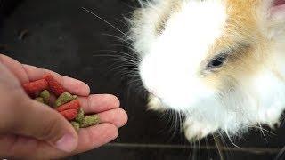 Ngasih Makan + Memandikan Kelinci Lucu dibantu Mama 💖 Hewan Peliharaan Jessica Jenica di Rumah