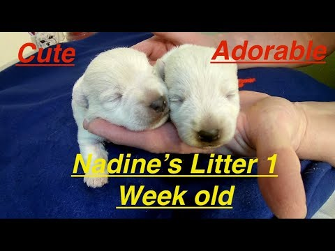 nadines-litter-is-1wk-old-2/12/18