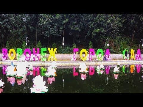Воронежский океанариум. Пираньи // Voronezh Aquarium - YouTube
