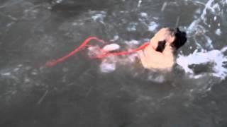 Pug swimming at jimbaran beach bali