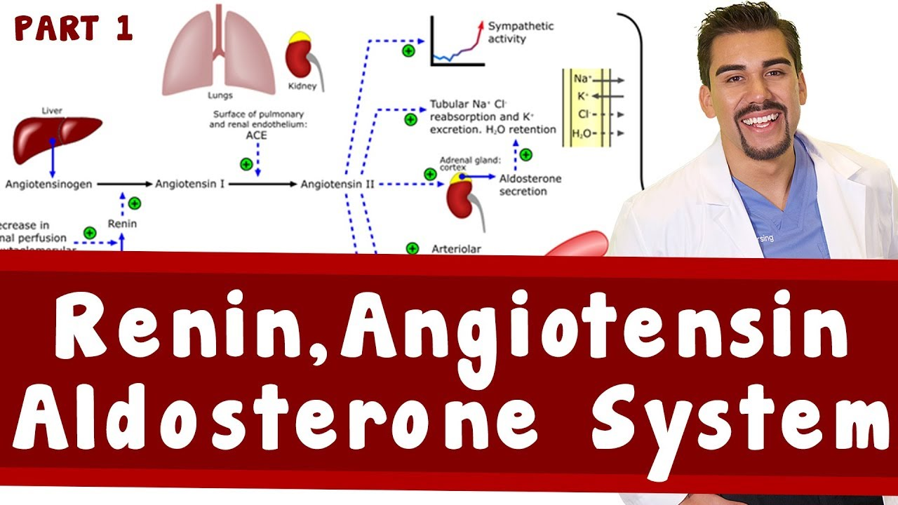 Renin Angiotensin Aldosterone System Part 1 Youtube