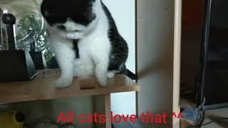 Funny cat, Kiki the cat have fun^^ Meow