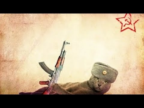 Смешные кошки :)  Часть 228 - Война так война! :))