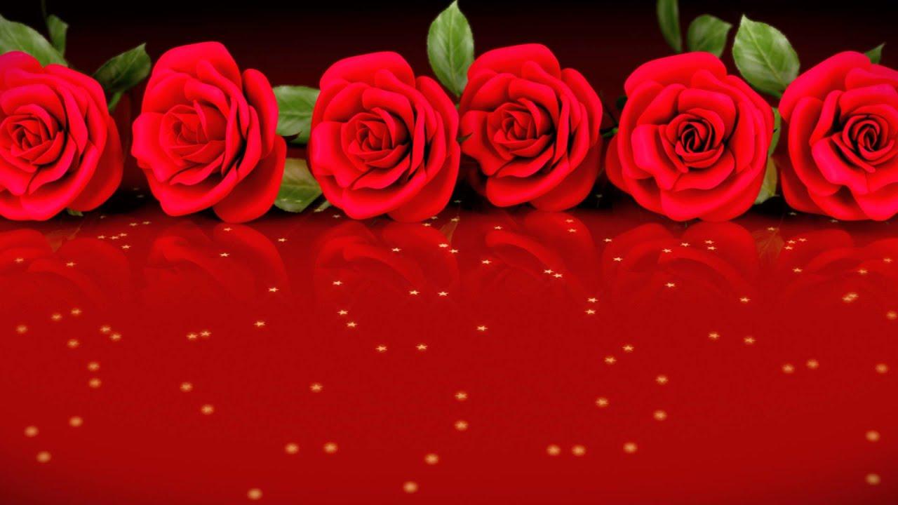 Fondo De Pantalla Flores Blancas En Fondo Rosa: Fotos De Rosas Imgenes De Rosas Y Wallpapers De Rosas