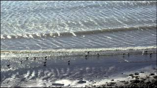 "Chopin -  Étude in A-flat major, Op. 25 No. 1 (""Harp Study"") - Nikita Magaloff"