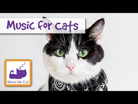 Music for Cats - Improves Well-being, Relieves Stress and Fear, Helps Against Boredom