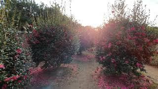 제주 표선 가볼만한곳 허브동산 동백꽃 필 무렵