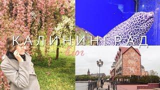 Калининград | ВЛОГ | 2019