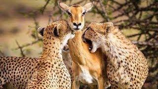 देखिये एक माँ ने कैसे अपने बच्चे के लिए खुदकों कुर्बान कर दिया।5 animals who saved other animals...