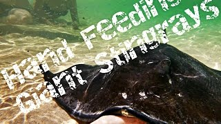||Hand Feeding a very strange friend, when we relized what it was shocking video ||