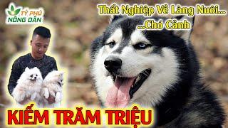 Nuôi Chó Cảnh Vừa Giầu Vừa Vui