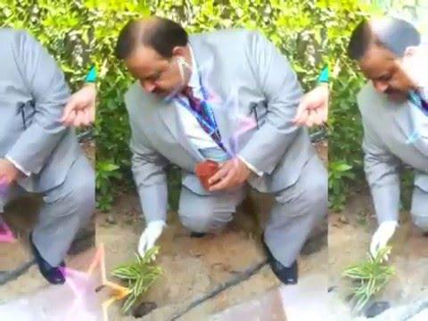 Planting Initiative at English Language School Dubai