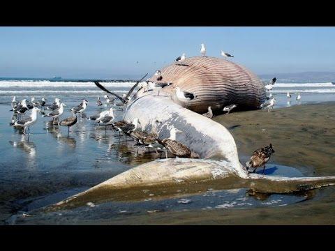Dünya'nın En Büyük 10 Hayvanı
