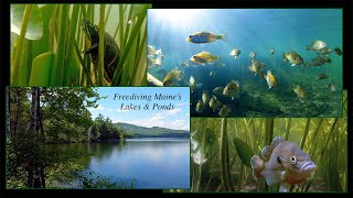 Freediving Maine's Lakes & Ponds