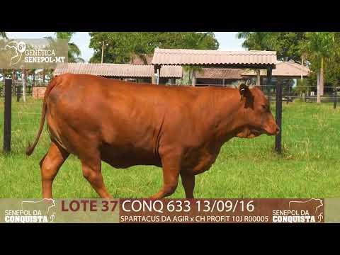 LOTE 37 CONQ 633