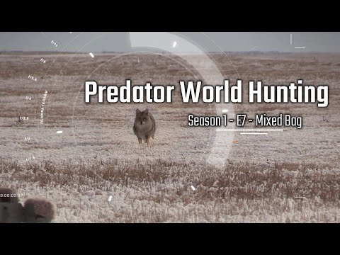 Coyote Hunting – PWH Season 1 Episode 7 – Mixed Bag