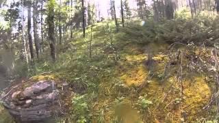 Медведь напугал велосипедистов в лесу(не забуть оставить подписку!, 2014-03-01T08:39:18.000Z)