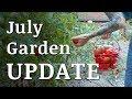 Our July GARDEN Update!
