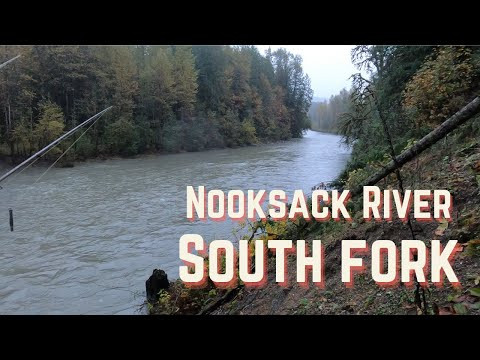 Washington Salmon Fishing 2020 (South Fork Nooksack River)