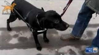 """""""Собаки-помощники инвалидов"""""""
